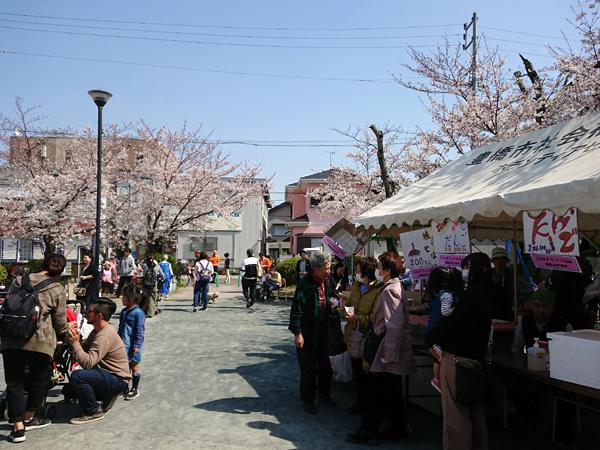 笑い太鼓さんの桜まつりの写真
